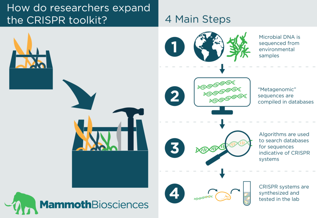 Infographic showing the process researchers use to expand the CRISPR toolkit