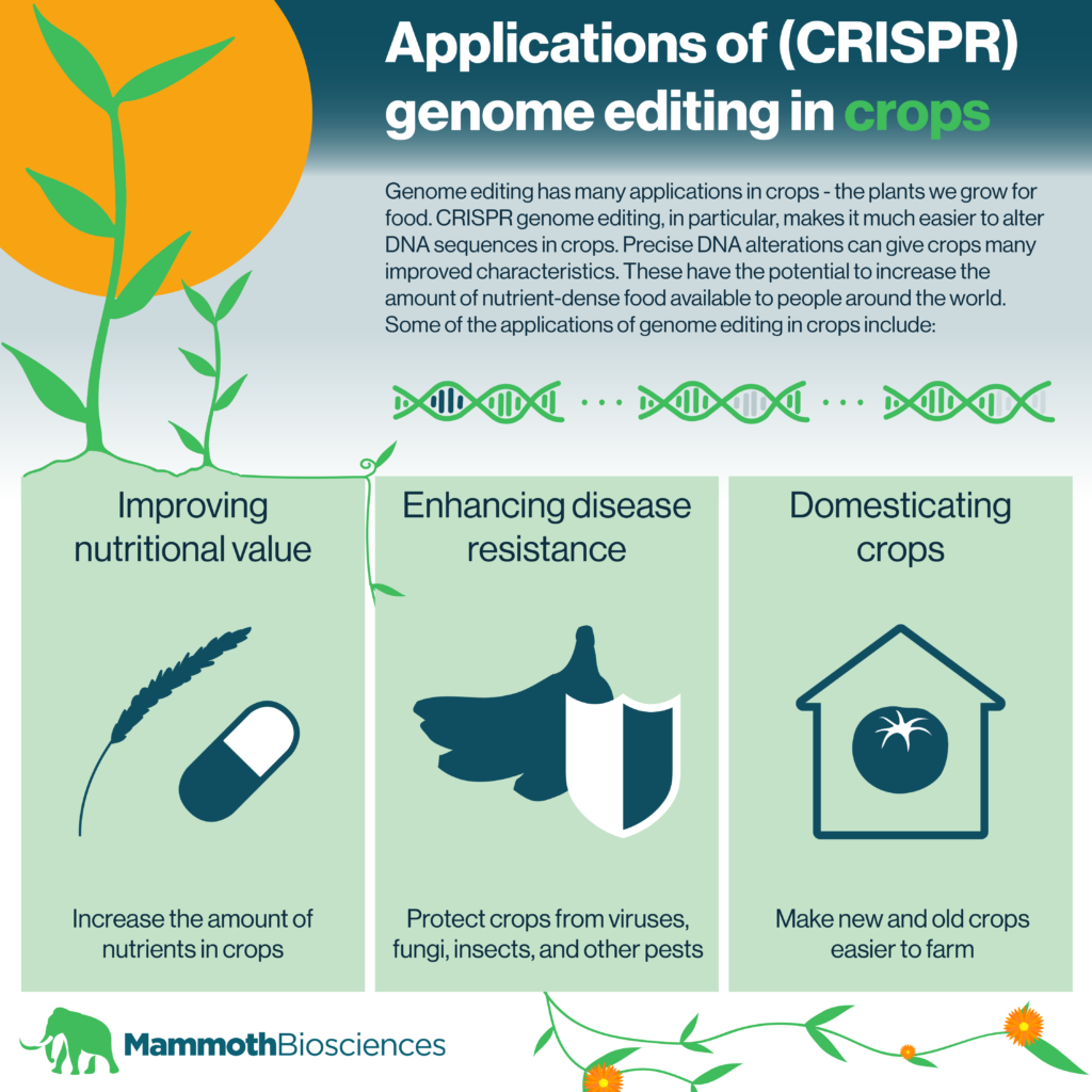 Applications of (CRISPR) genome editing in crops infographic. Applications include: improving nutritional value, enhancing disease resistance, and domesticating crops.