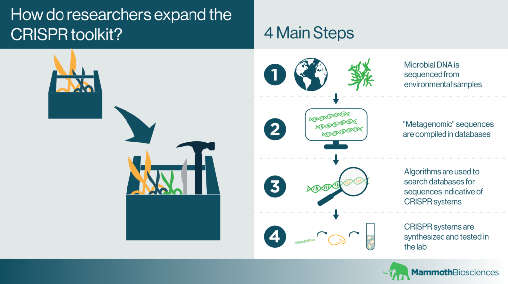 Infographic showing the process that researchers use to expand the CRISPR toolkit.