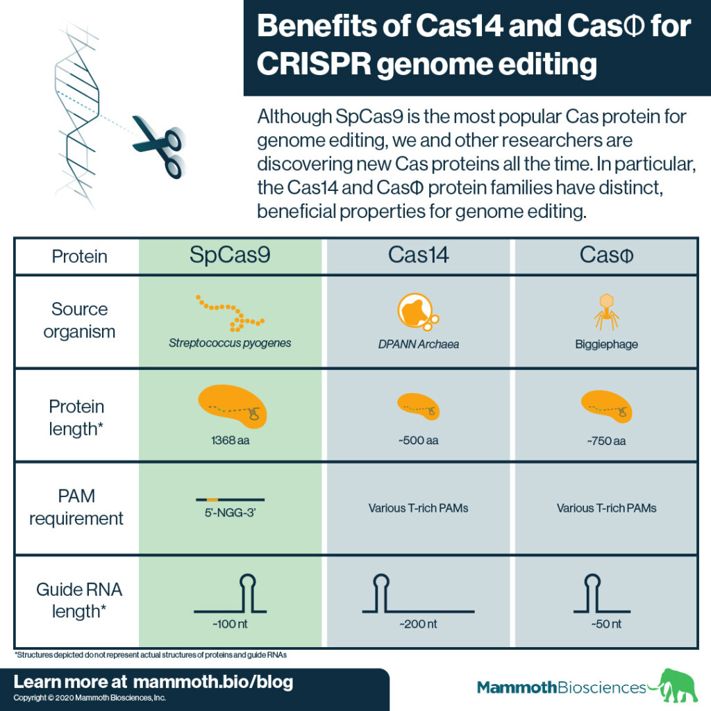 Infographic describing the benefits of Cas14 and CasPhi for genome editing as compared to SpCas9.