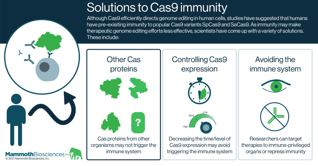 Graphic highlighting solutions to Cas9 immunity. Although Cas9 efficiently directs genome editing in human cells, numerous studies have shown that humans have pre-exisiting immunity to popular Cas9 variants SpCas9 and SaCas9. As immunity may make therapeutic genome editing efforts less effective, scientists have come up with a variety of solutions. These include: other Cas proteins (Cas proteins from other organisms may not trigger the immune system), controlling Cas9 expression (Decreasing the time/level of Cas9 expression may avoid triggering the immune system), and avoiding the immune system (Researchers can target therapies to immune-privileged organs or repress immunity).