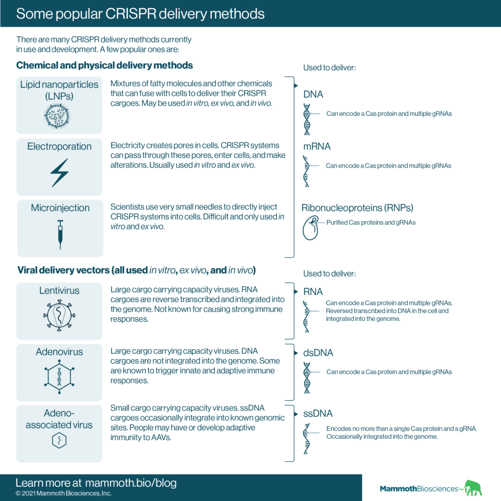 Image showcasing some popular CRISPR delivery methods including lipid nanoparticles (LNPs), electroporation, microinjection, lentivirus, adenovirus, and adeno-associated virus