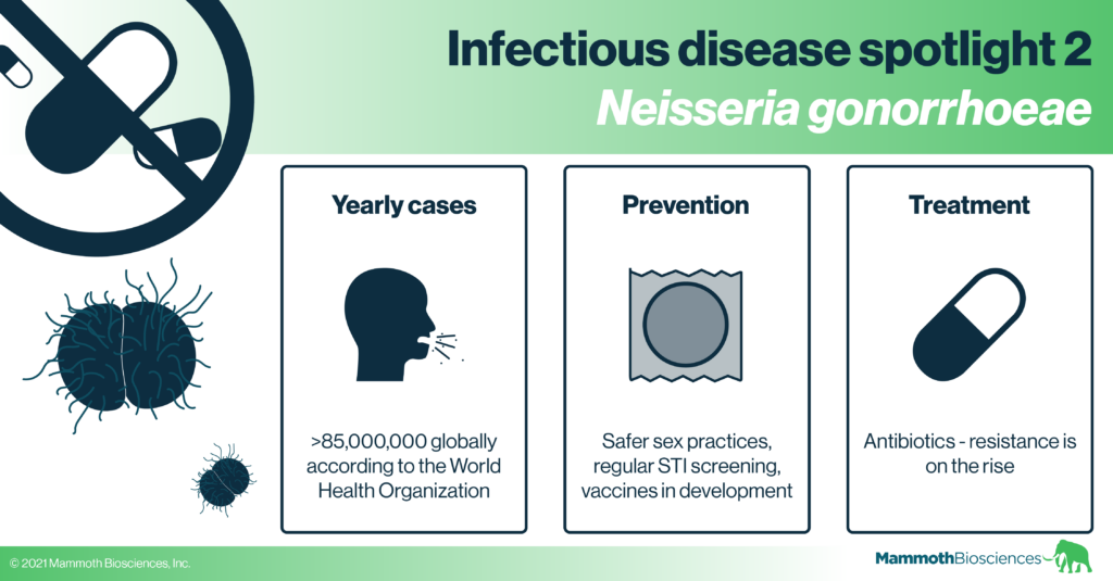 Neisseria gonorrhoeae are antibiotic resistant bacteria behind the common STI, gonorrhoea. More than 85,000,000 people are infected with gonorrhoeae each year. Safer sex practices and STI screening can prevent gonorrhoea. Vaccines are under development but no effective ones are available yet. While many cases of gonorrhoea can be treated with antibiotics, antibiotic resistance is on the rise for this and many other bacteria.
